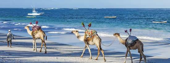 Kenya Coast - The Kenyan CoastKenya Coast - The Kenyan CoastKenya Coast - The Kenyan CoastKenya Coast - The Kenyan CoastKenya Coast - The Kenyan CoastKenya Coast - The Kenyan CoastKenya Coast - The Kenyan Coast