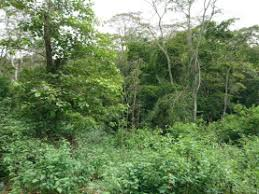 Njukiri Forest