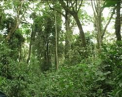 Rainforest in Kakamega Kenya