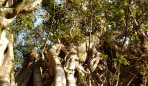 Mugumo Gardens