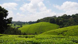 Land in Kenya