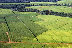 Tea Plantations In Kericho