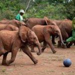 Animal Orphanage - Nairobi Kenya