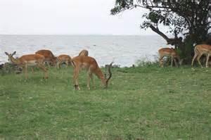 Kisumu Impala Sanctuary - Impala Park Kisumu