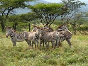 Shaba National Reserve Kenya