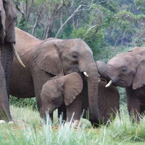 A Herd of Elephants In The Abadare Nation Park Photo