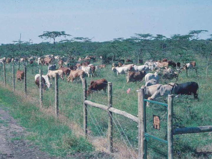 Ranches in Kenya - Ranching in Kenya