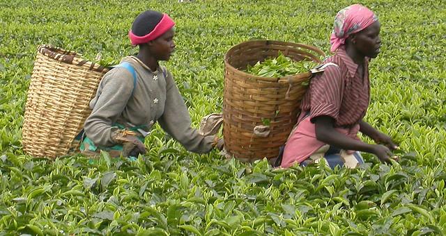 Farming in Kenya