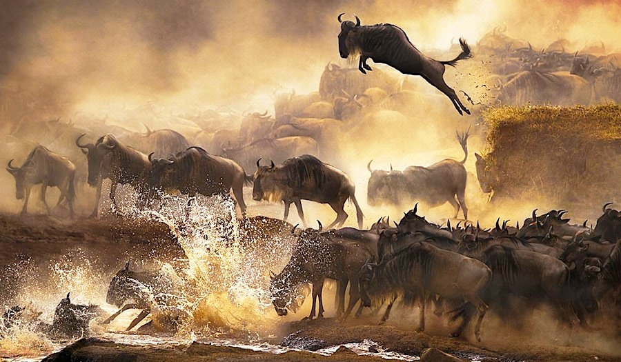 Masai Mara National Reserve - Masai Mara Game Reserve