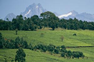 Vegetation in Kenya