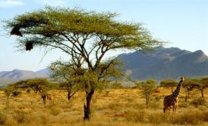 Tourist Attractions in Kenya - Samburu National Reserve