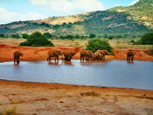 Tourist Attractions in Kenya - Tsavo National Park