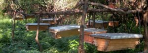 Beekeeping in Kenya - Bee Farming in Kenya