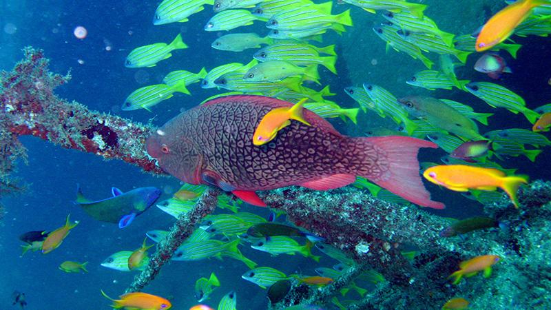 Kiunga Marine National Park Kenya