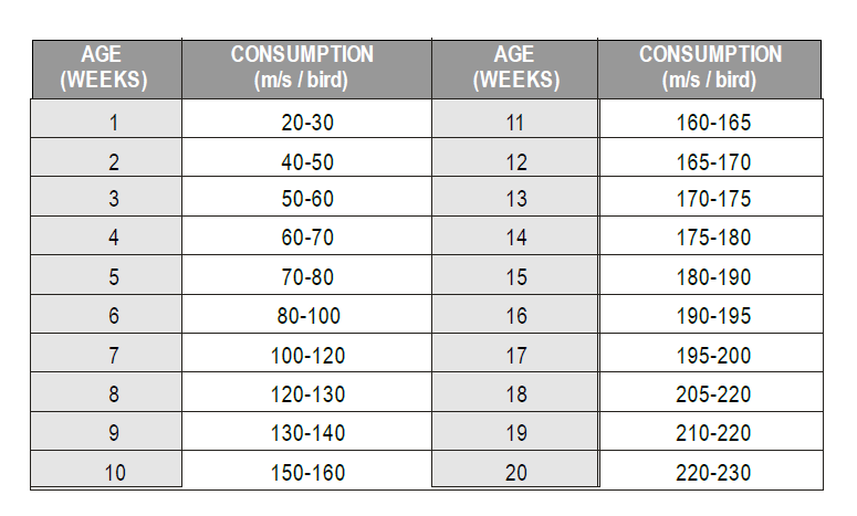 Poultry Farming in Kenya - Daily water consumption