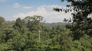 South Nandi Forest