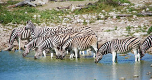 Tourism and Tourists Attractions in Machakos County