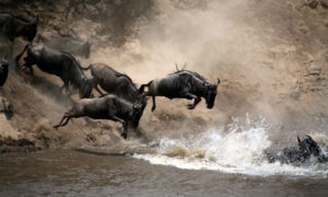 Tourism in Narok County