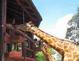 Garissa Community Giraffe Sanctuary
