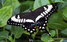 Kipepeo Butterfly Project