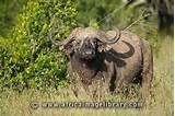 Laikipia Wildlife Conservancy
