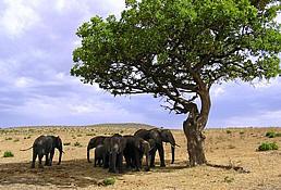 Nasalot National Reserve