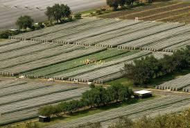 Oserian Farms