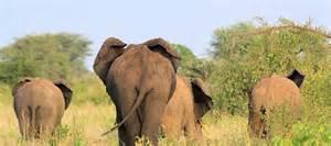 Rahole National Reserve