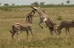 South Kitui National Reserve