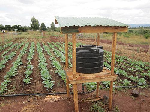 Drip Irrigation in Kenya
