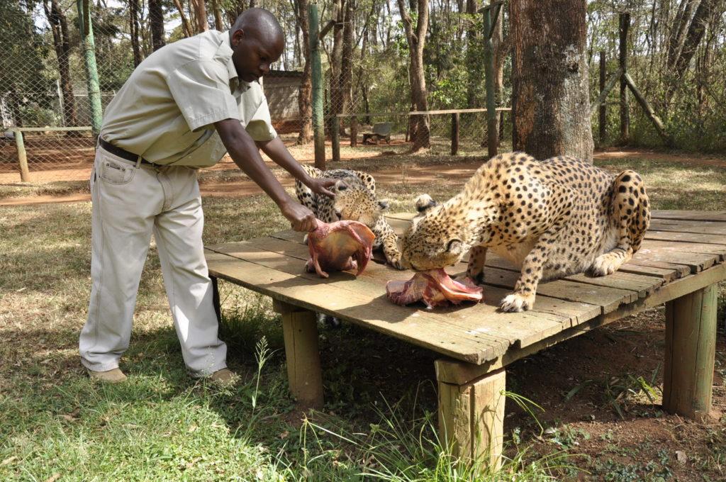 Places to Visit in Nairobi - Nairobi Animal Orphanage