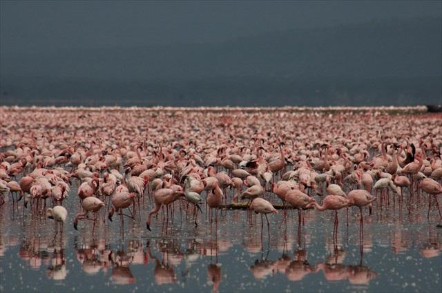 Nakuru Town - Nakuru Kenya Photo